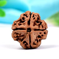Collector Four Mukhi from Nepal - CCCX
