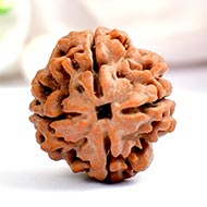Collector Four Mukhi from Nepal - CCLI