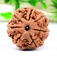 Collector Seven Mukhi from Nepal - CCIX