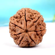 Collector Seven Mukhi from Nepal - CCLXXII