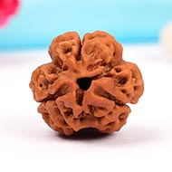 Collector Three Mukhi from Nepal - LXIX