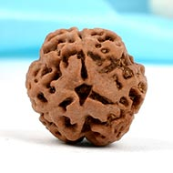 Collector Three Mukhi from Nepal - LXXX
