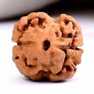 Collector Two Mukhi - XXII