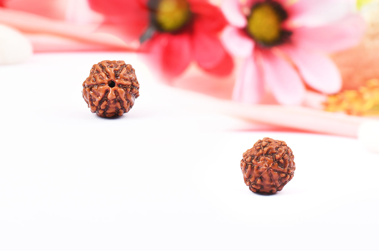 Six Mukhi from Java Indonesia - Small