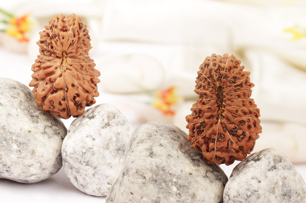 Collector Eighteen Mukhi from Java indonesia - IV