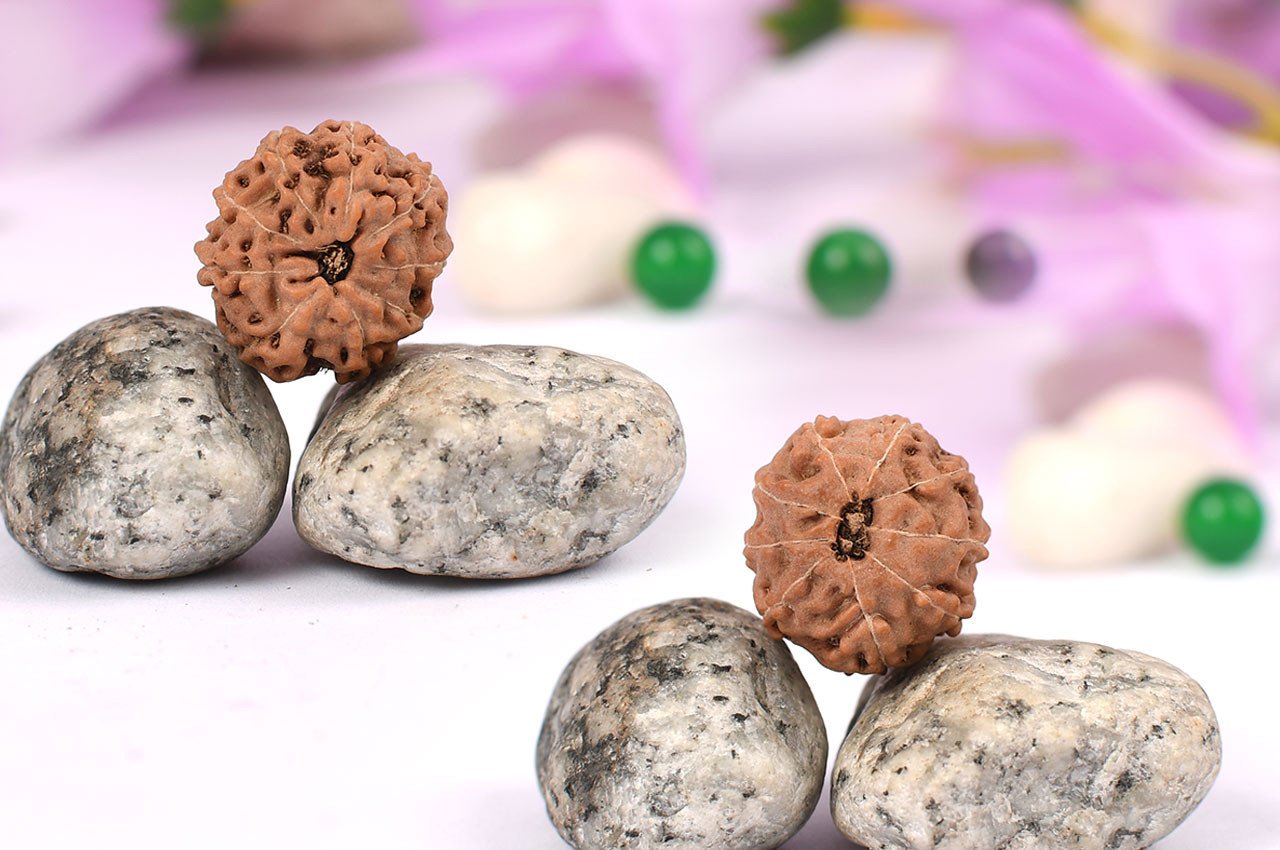 Nine Mukhi from Java Indonesia - Small