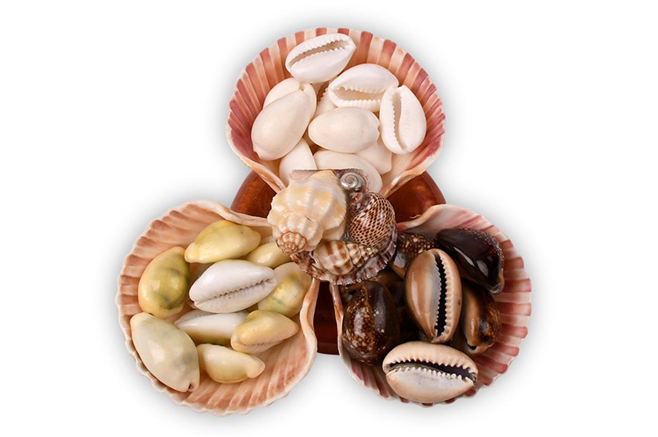 Lucky Cowrie shells
