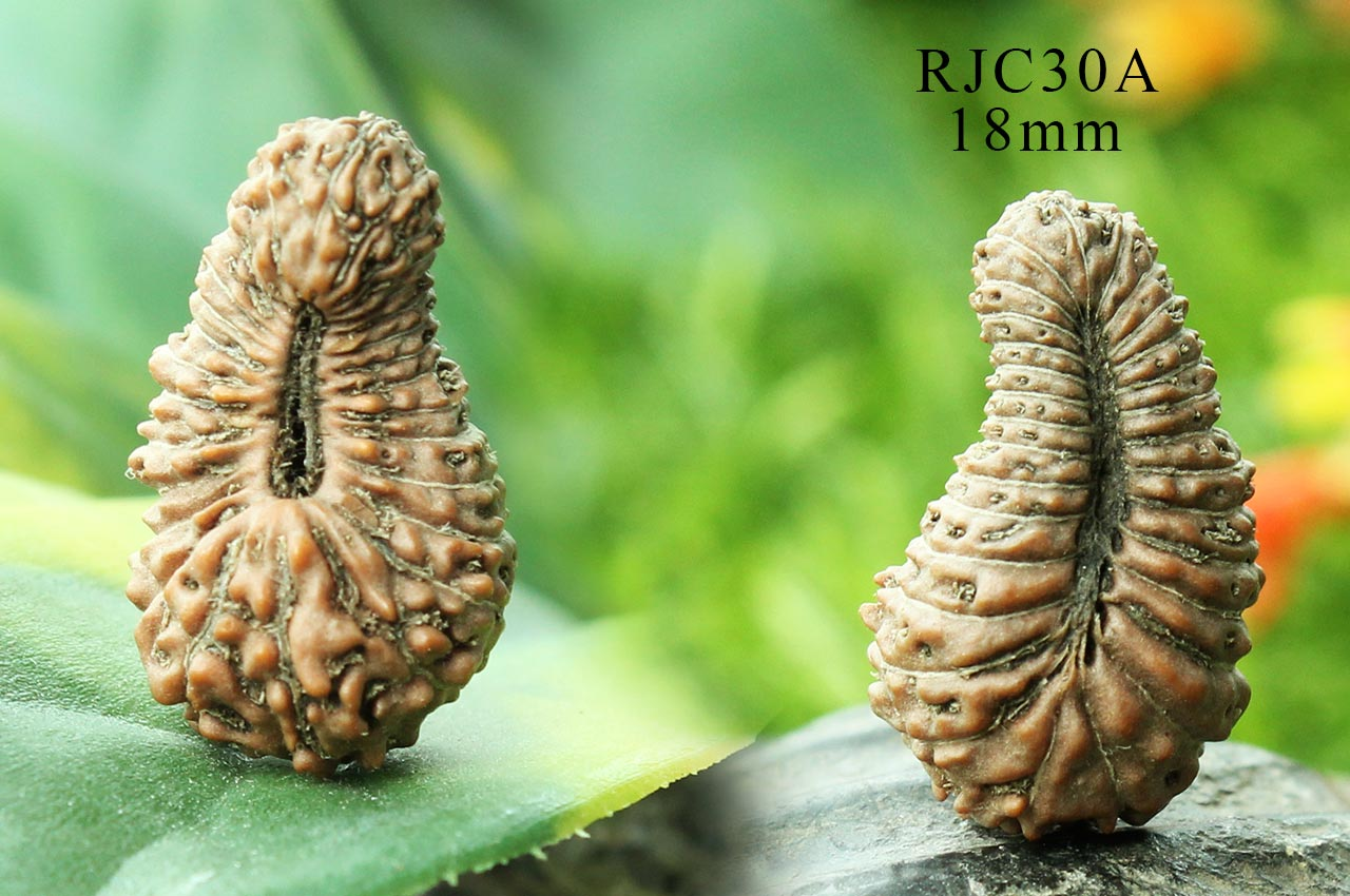 Collector Thirty Mukhi from Java