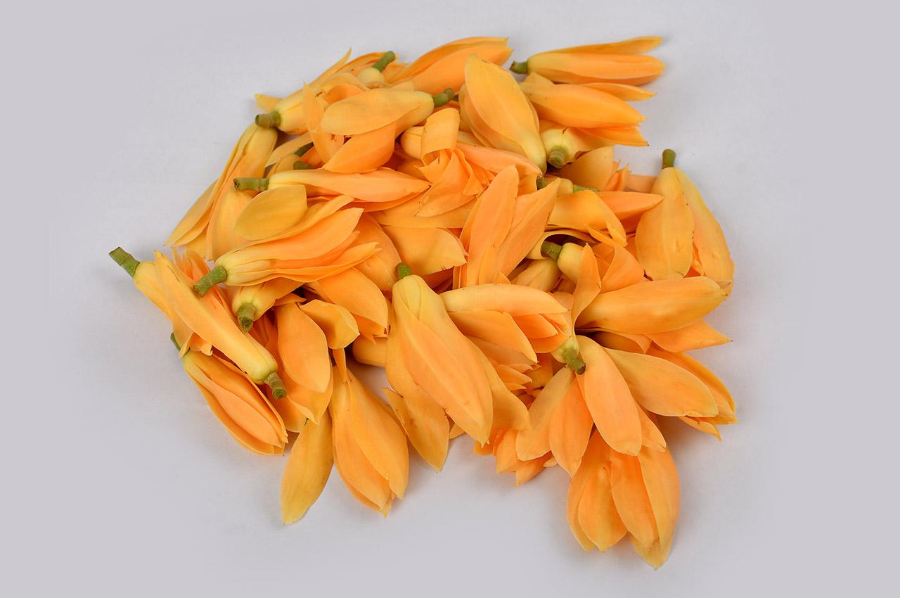 Champa Flower / Plumeria