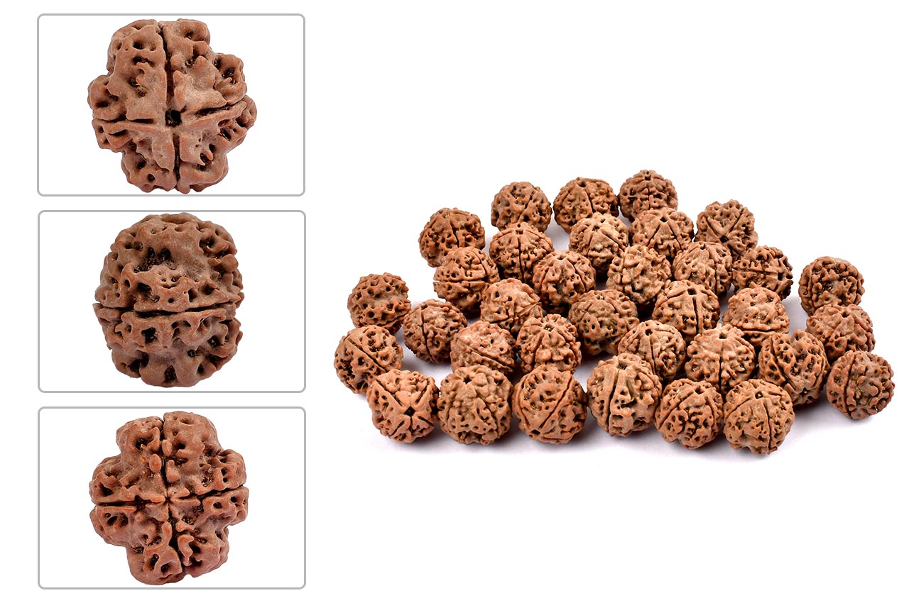 Four Mukhi from Nepal