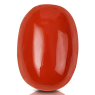 Red Italian Coral - 16 carats