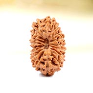 Seventeen Mukhi from Java Indonesia - Small - LXIII