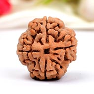 Super Collector Four Mukhi from Nepal - XVIII