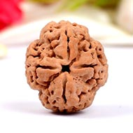 Super Collector Four Mukhi from Nepal - XX
