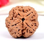 Super Collector Four Mukhi from Nepal - XXXII