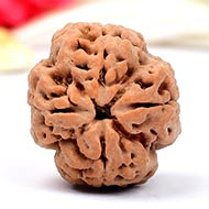 Super Collector Four Mukhi from Nepal - XXXVII