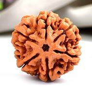 Super Collector Six Mukhi from Nepal - CII